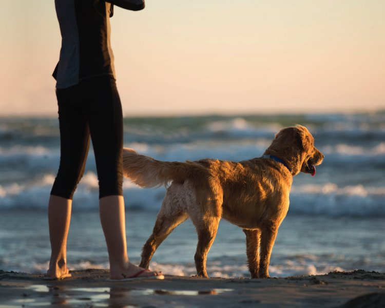 4 Things We Can Learn From Dogs